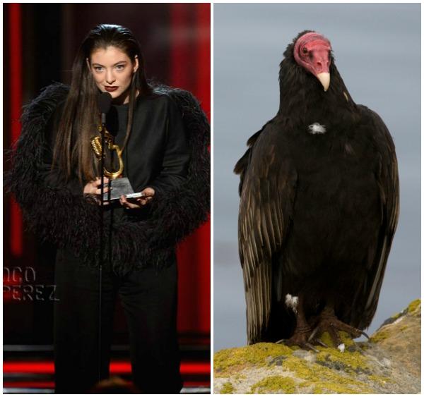 Lorde Vulture